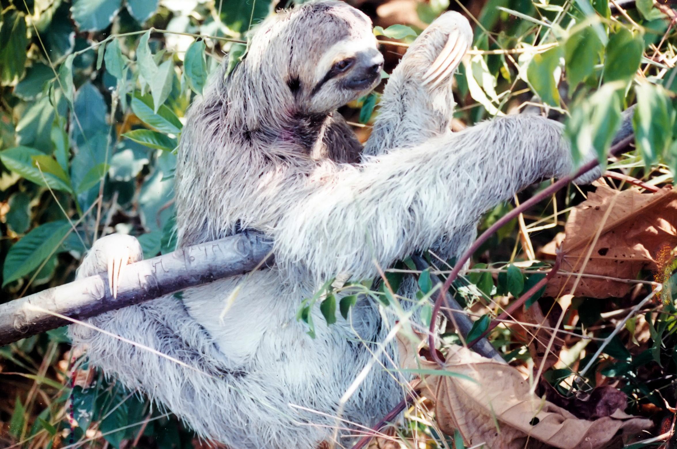 JPEG  0884 sloth